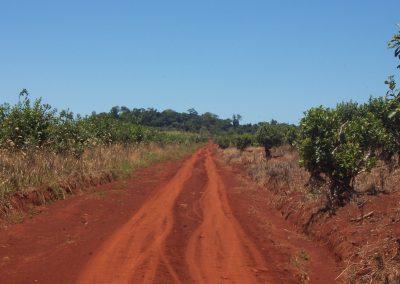 Tierra-misionera paisajes tierra roja en argentina
