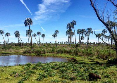 foto parque nacional el palmar entre rios
