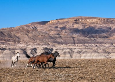 fotos de la patagonia argentina caballos santa cruz