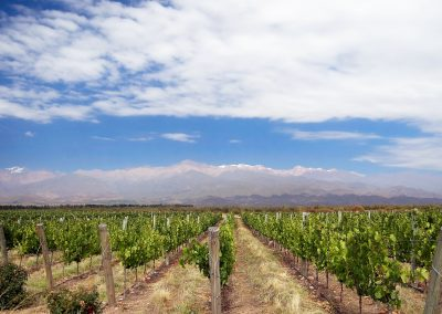 viñedos Vineyard_in_Mendoza,_Argentina