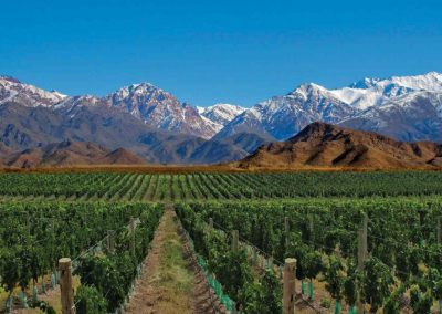 vinos viñedos Mendoza-Argentina